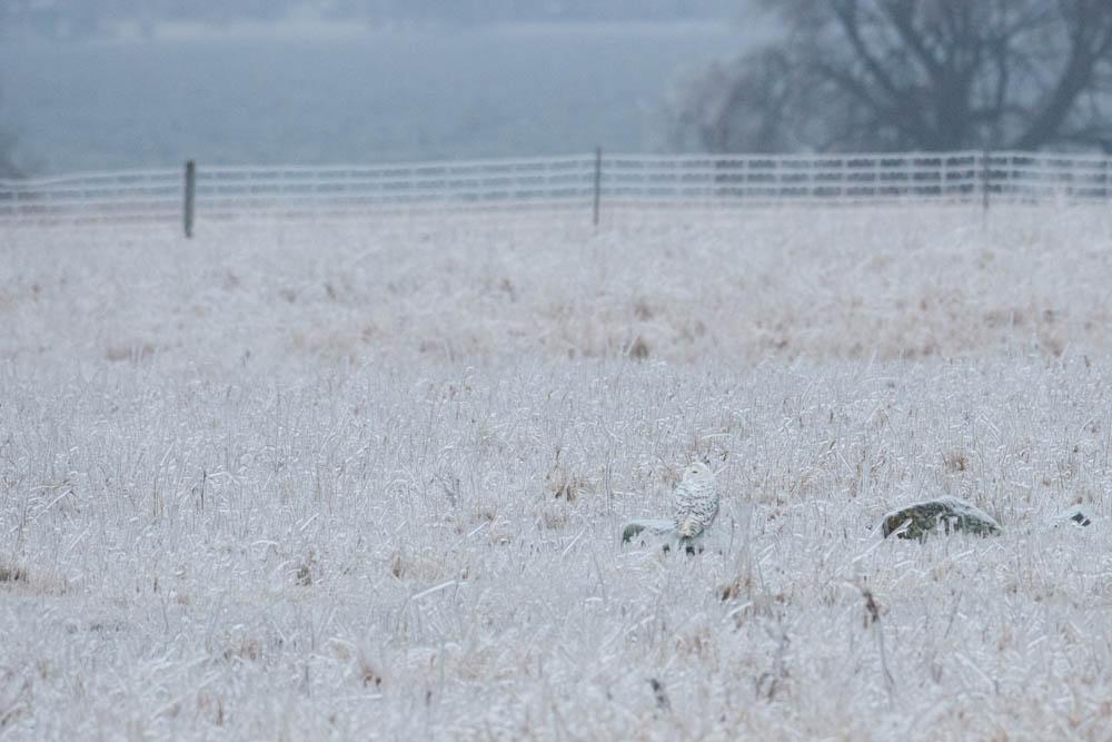 ice storm field