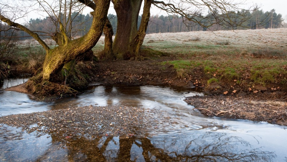 The brook has an infinate variety of niches where wildlife can thrive.