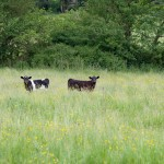 Lea Meadows nature reserve, Charnwood Forest, Leicestershire