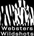 Webster's Wildshots
