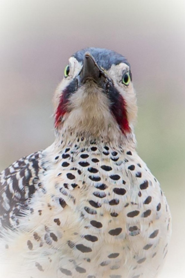 The look of a flicker
