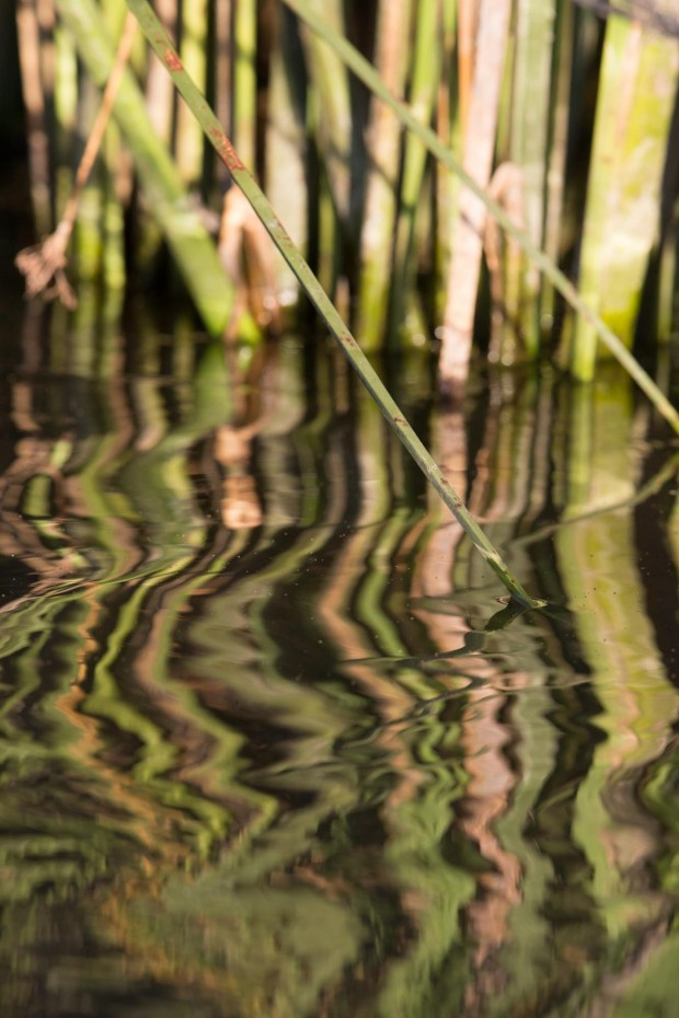Los reflejos de los juncos en el agua