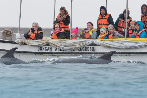 Una familia mira delfines narizes de botella