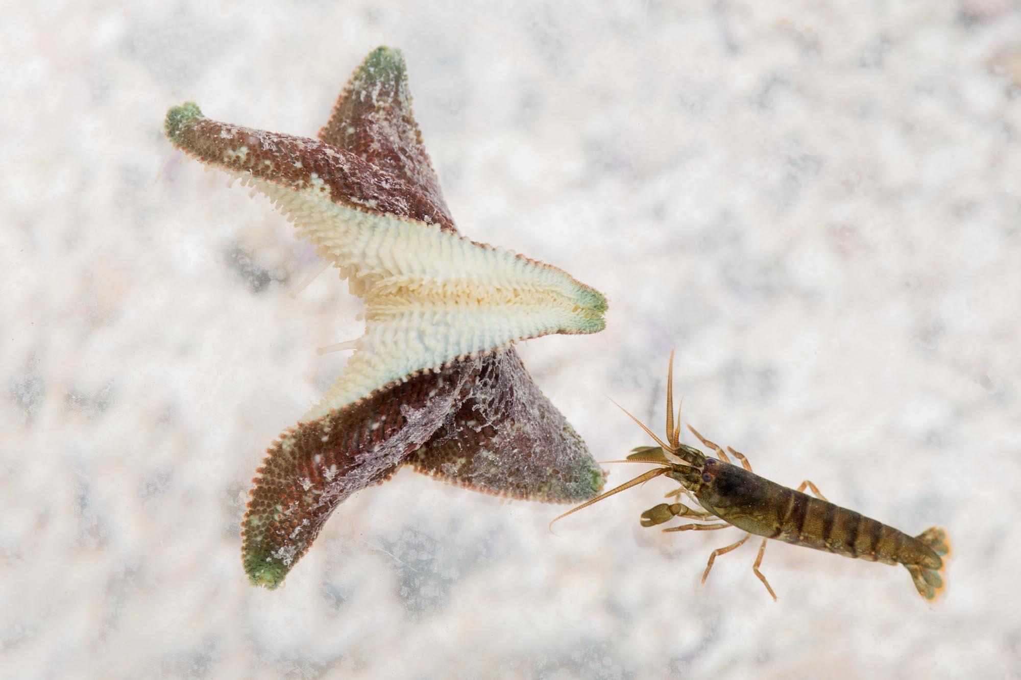 Estrella de mar y crustaceo