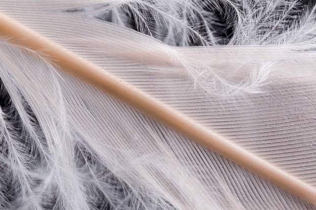 Una pluma de un flamenco