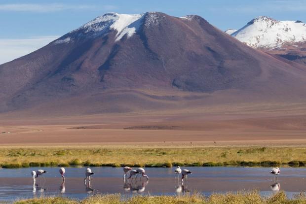 Los Flamencos chilenos en la Puna (3500m)